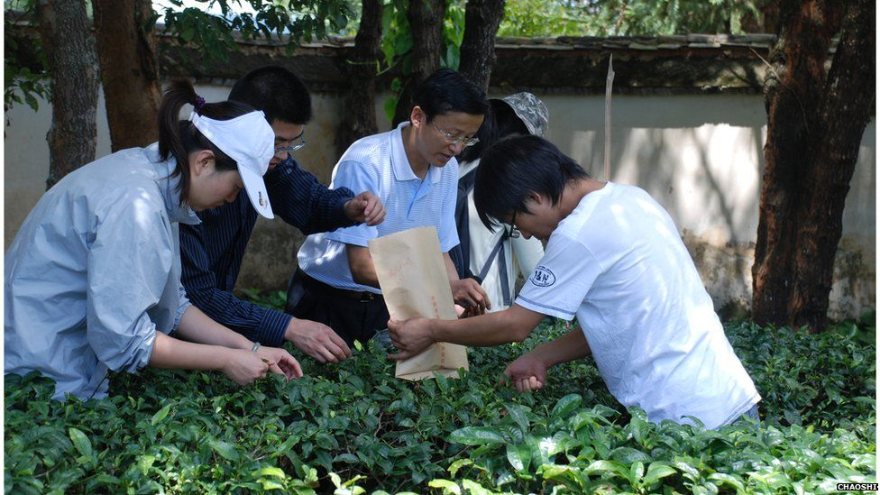 Researchers collect leaves for analysis