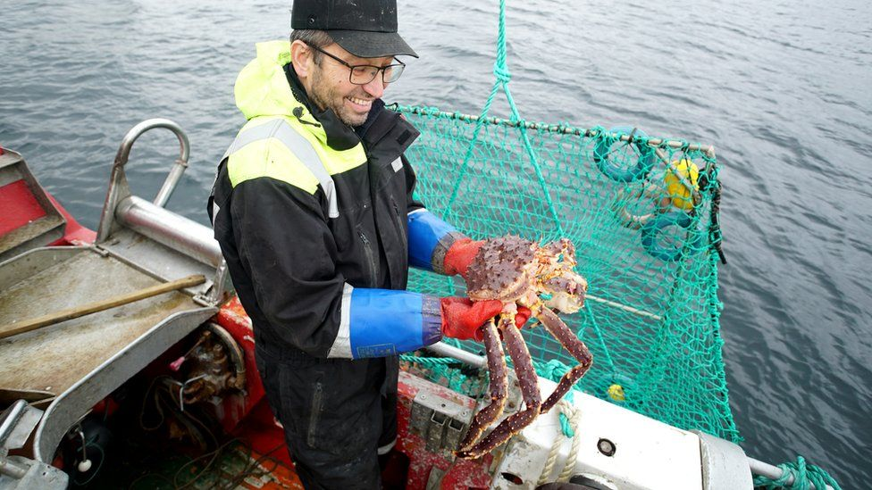 Einar Julissen hauls up a basket of large crabs in the Repparfjord