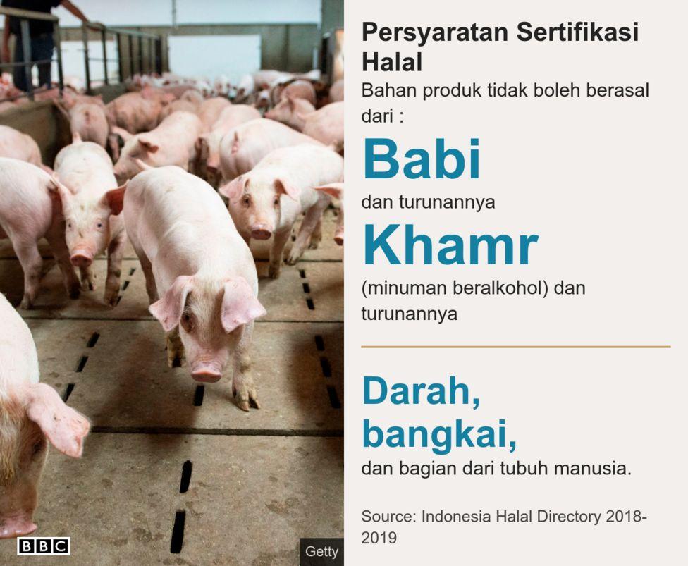440+ Gambar Hewan Halal Dan Haram Gratis Terbaru