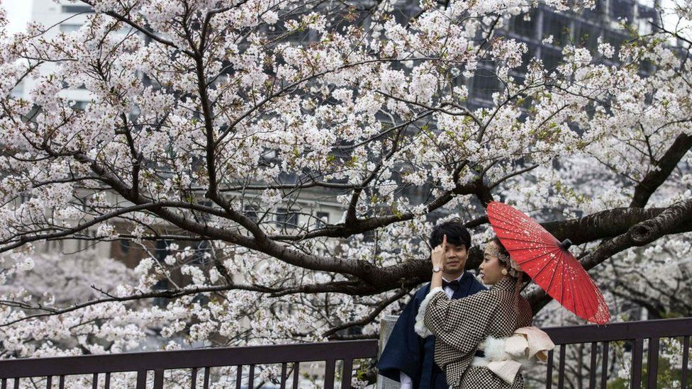 Couple pose for pictures with cherry blossoms in full bloom (Tokyo, 28 March)