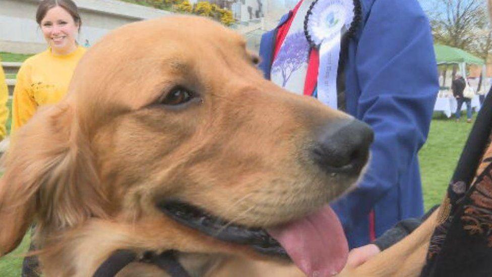 Public vote winner Buster