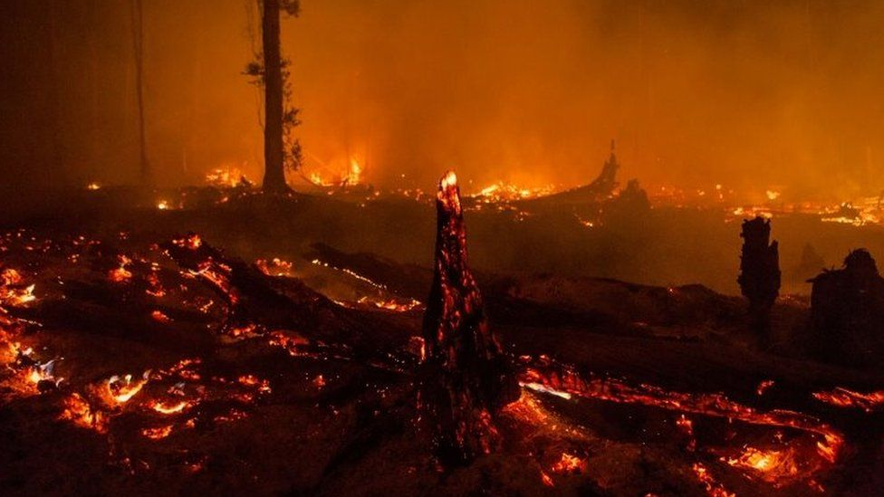 Forest fire on the outskirts of Palangkaraya, Central Kalimantan, Indonesia (01 November 2015)