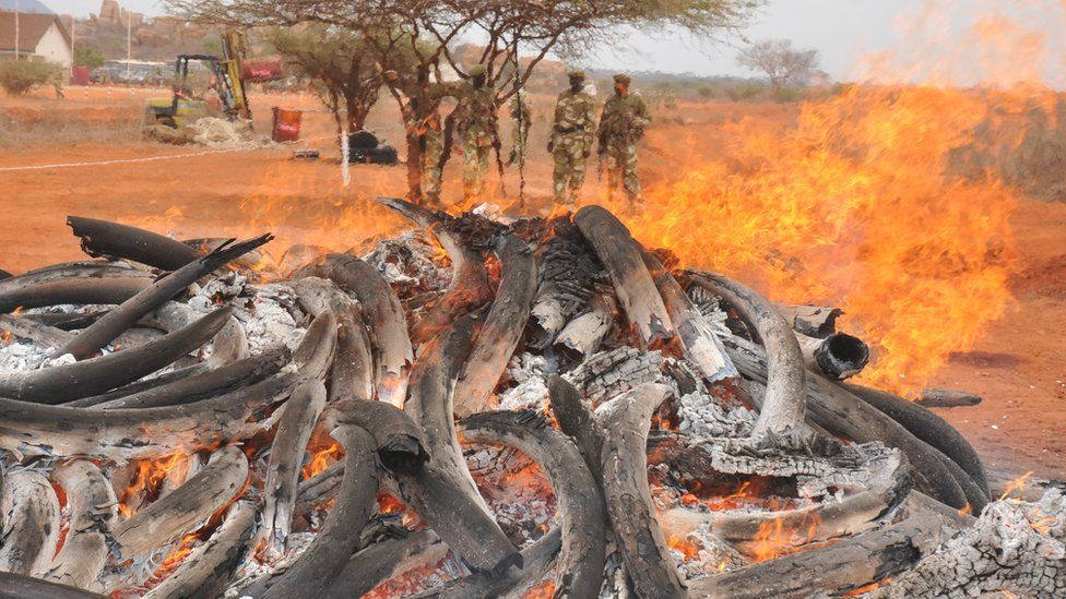 Ashes and elephant tusks mixed as tusks burn