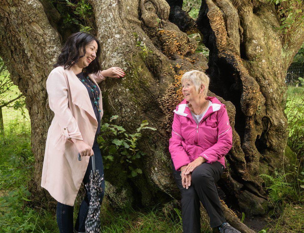 The Cadzow Oak