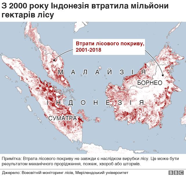 Втрати лісів