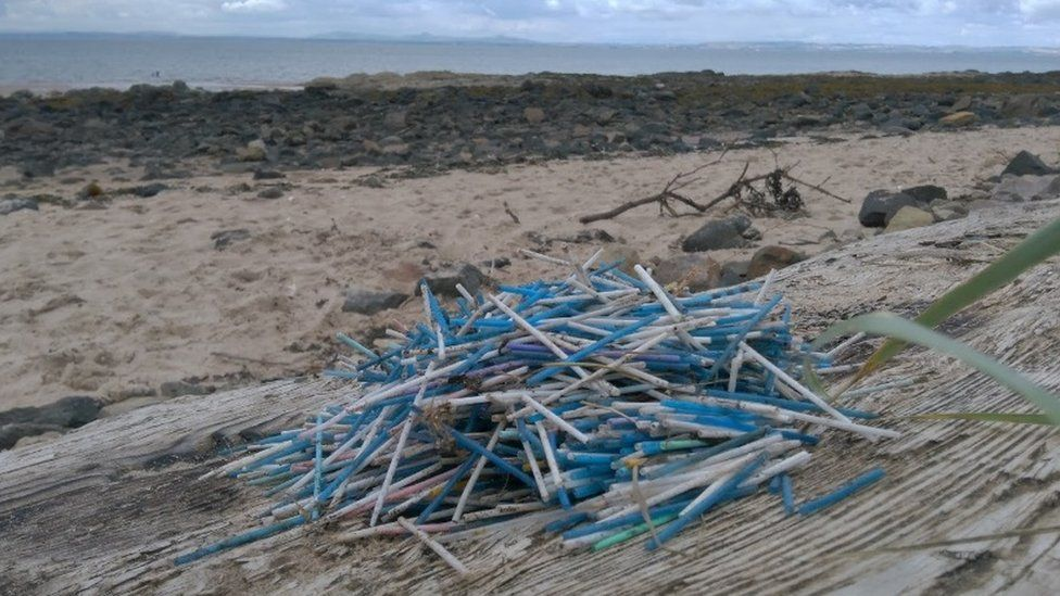 Cotton buds collected at Gullane