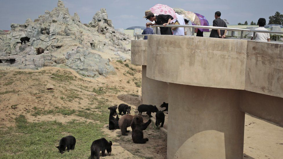 North Koreans look at bears at the newly opened Pyongyang Central Zoo in Pyongyang, North Korea, Tuesday, Aug. 23, 2016.