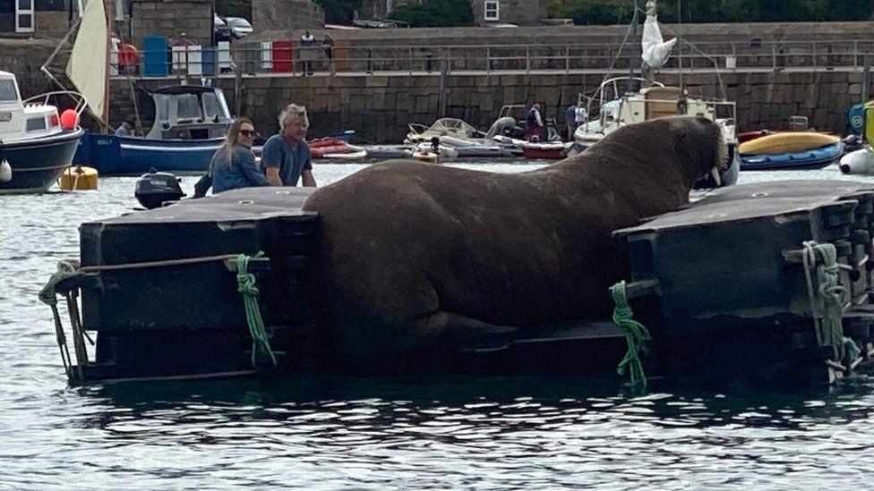Wally on his new pontoon