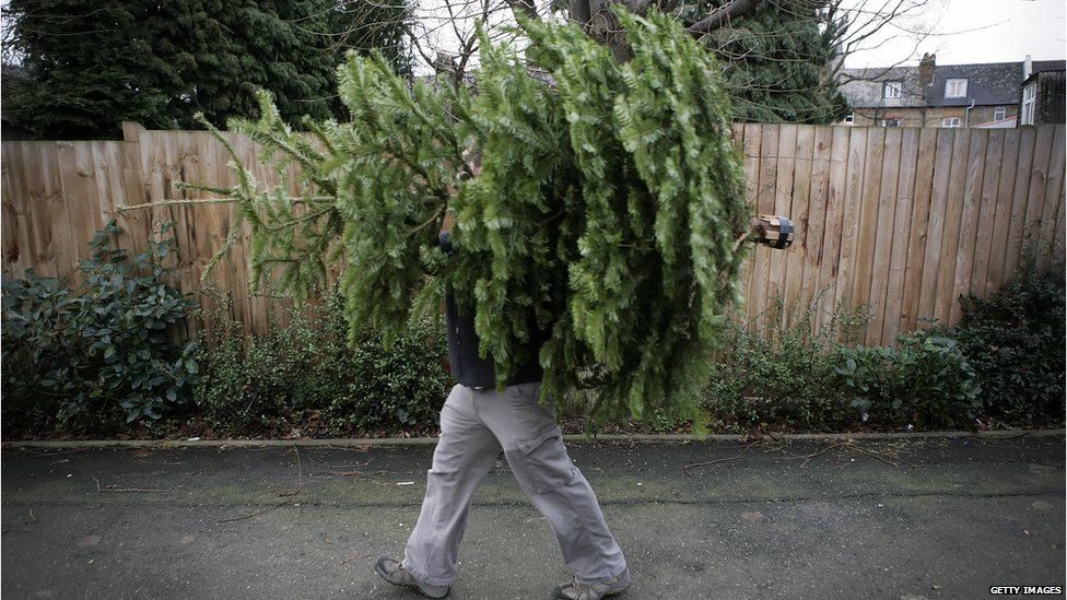 Turn your Christmas tree into chippings of coastal defences