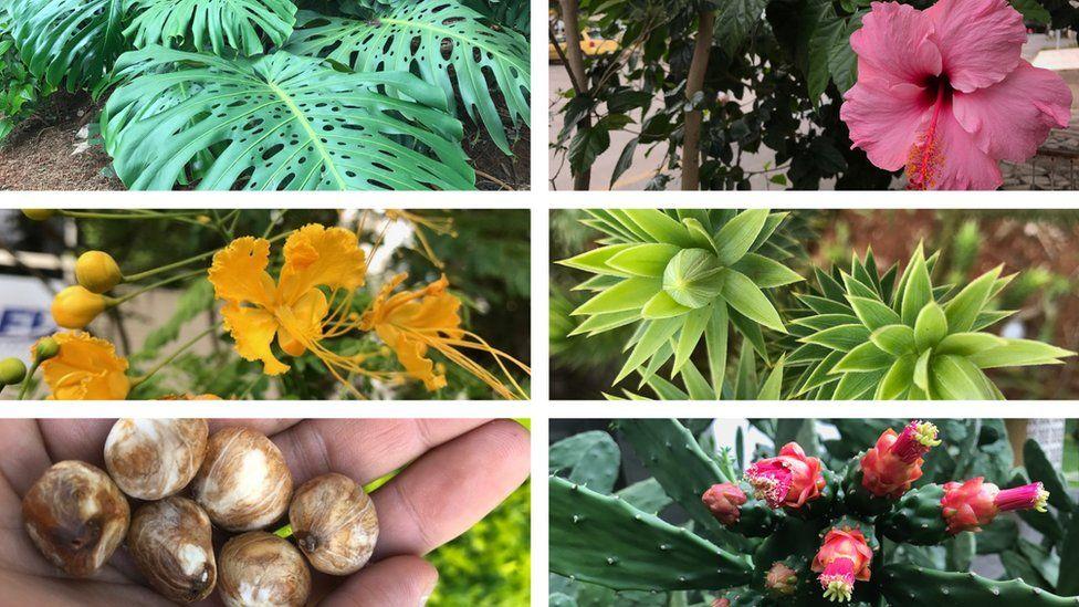 10 plantas urbanas comuns que você talvez não saiba que pode comer