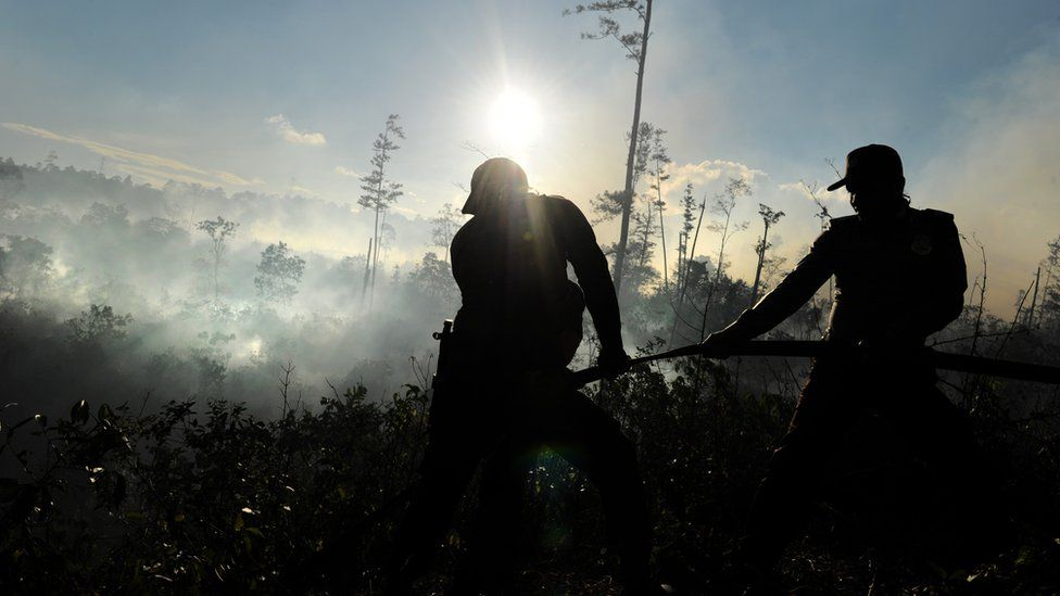 Men cutting down forest in Indonesia
