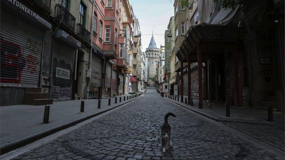 A cat walks in a empty street in Istanbul