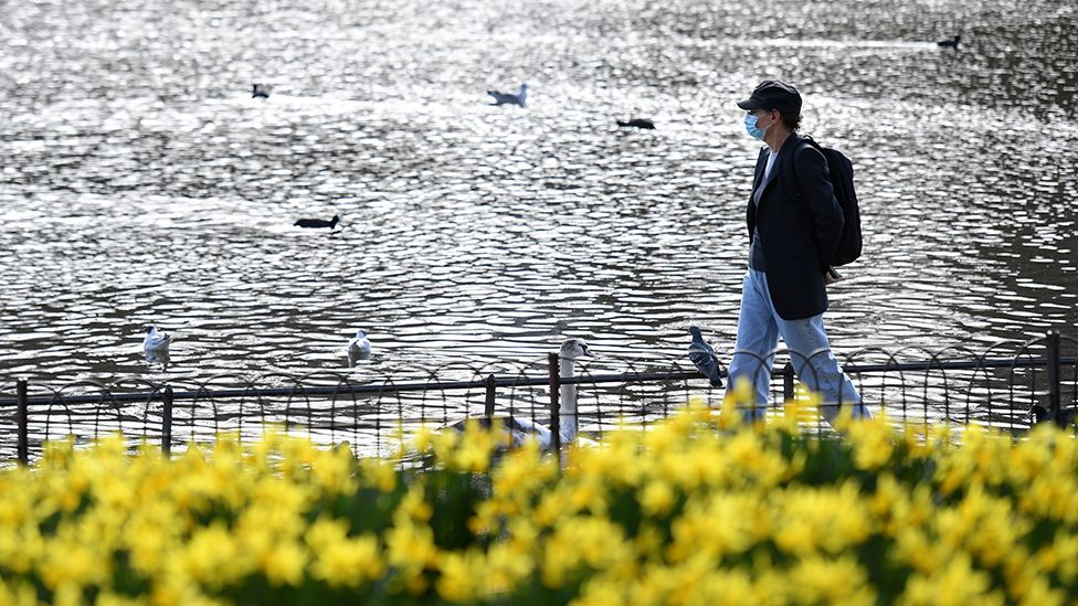 A pedestrian wearing a face covering walks past a flower bed full of spring daffodils in St James's Park in central London - 24 February 2021
