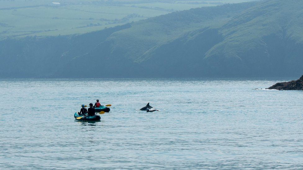Photograph taken of the incident: Two kayaks near dolphins