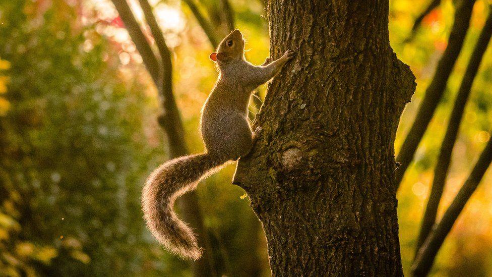 Squirrel climbing a tree