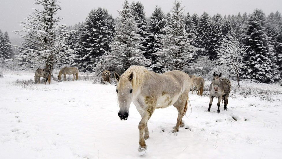 Horses standing in a snowy field in the mountains, taken at the end of October, illustrate the cold weather