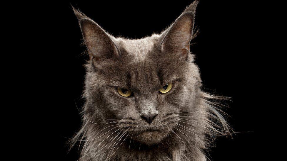 Картинки по запросу Как понять какое настроение у вашего кота?