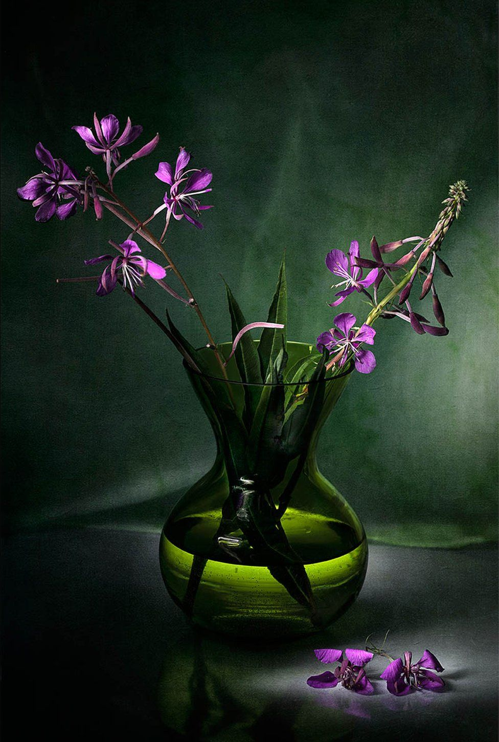 Vase in a dark room containing the flowers Chamaenerion angustifolium