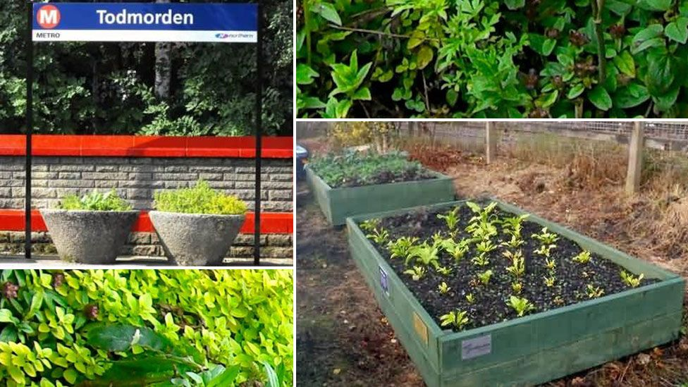Herbs and salad leaves grown at Todmorden railway station