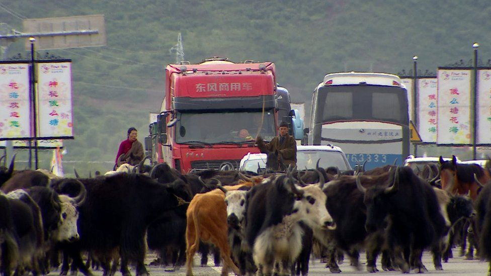 Dozens of yaks on a road, alongside herders on horseback, cars, busses and lorries