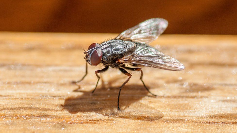 Stock photo of a fly