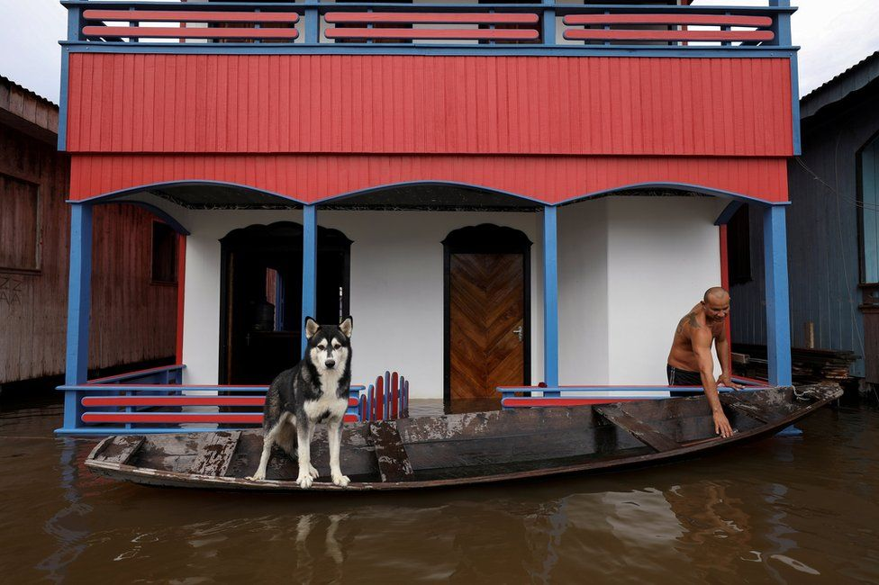 A man prepares his canoe next to his dog on a street flooded by the rising Solimoes river
