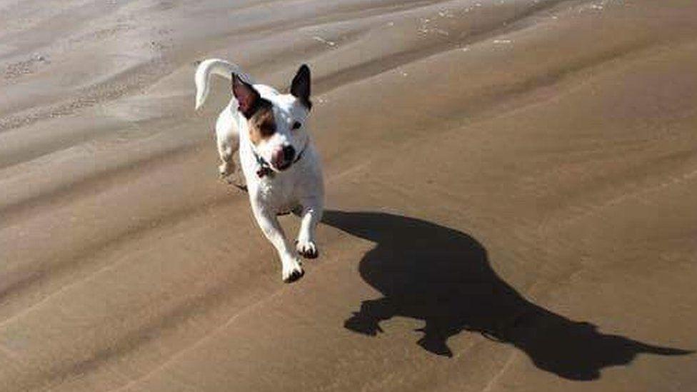Blodwen on the beach