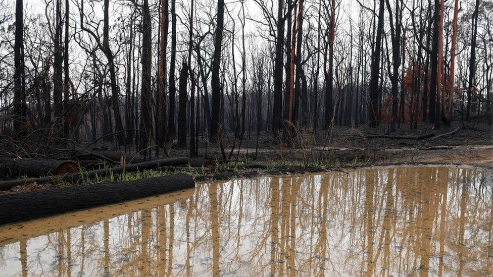 River on burned land in Gospers Mountain, NSW