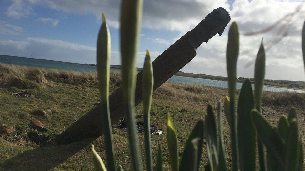 Totem pole through daffodils