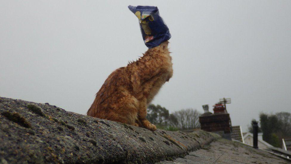 Cat with crisp bag on head