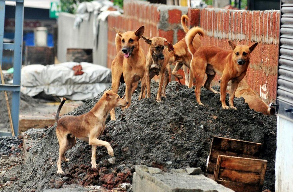 Stray dogs on a pile of industrial and slaughter waste