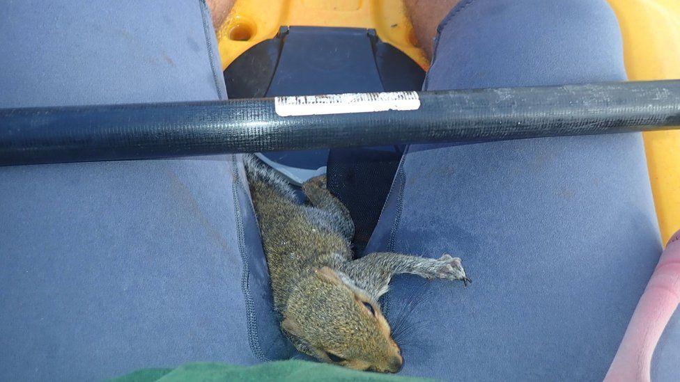 Squirrel in kayak