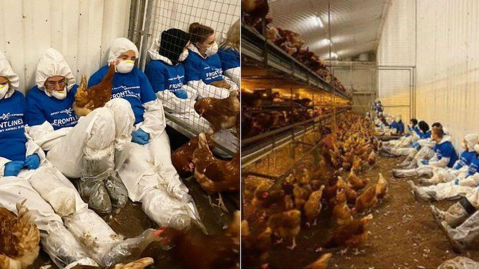 Activists at the egg farm