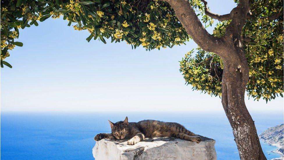 Коронавирус: Греция намерена открыть курортный сезон в середине ...