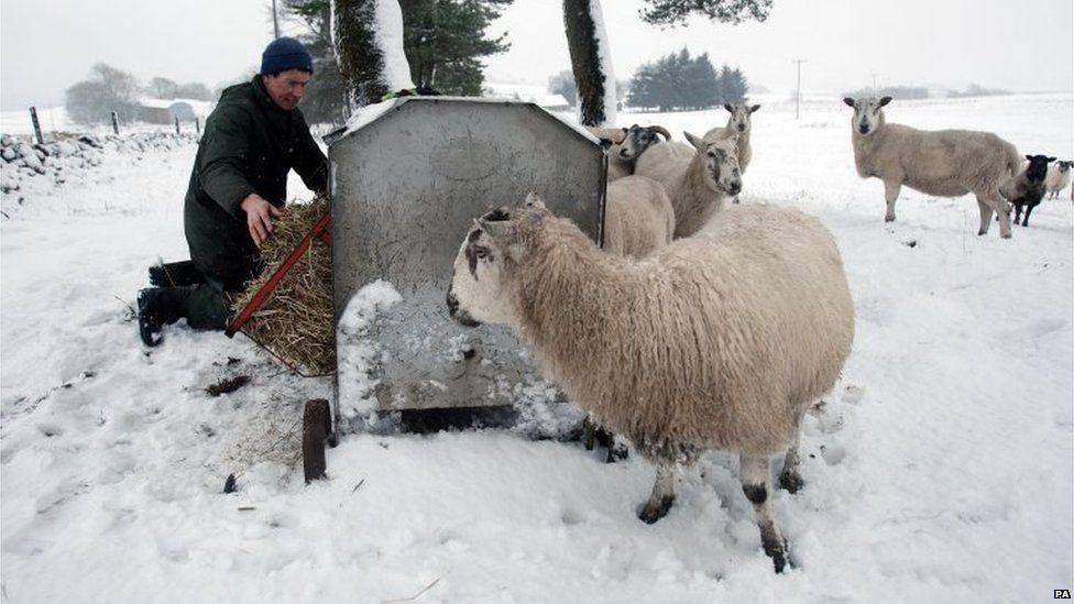Farming in Scotland