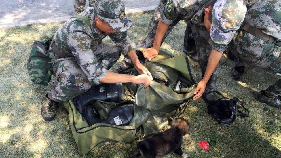 The puppy rests at a temporary shelter set up by rescue workers near the blast site in Tianjin, China
