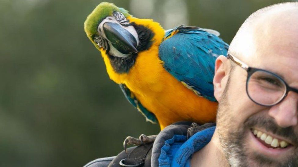 Parrot with man