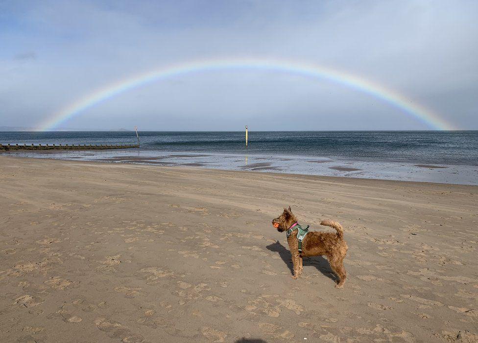 Dog on beach with rainbow over sea