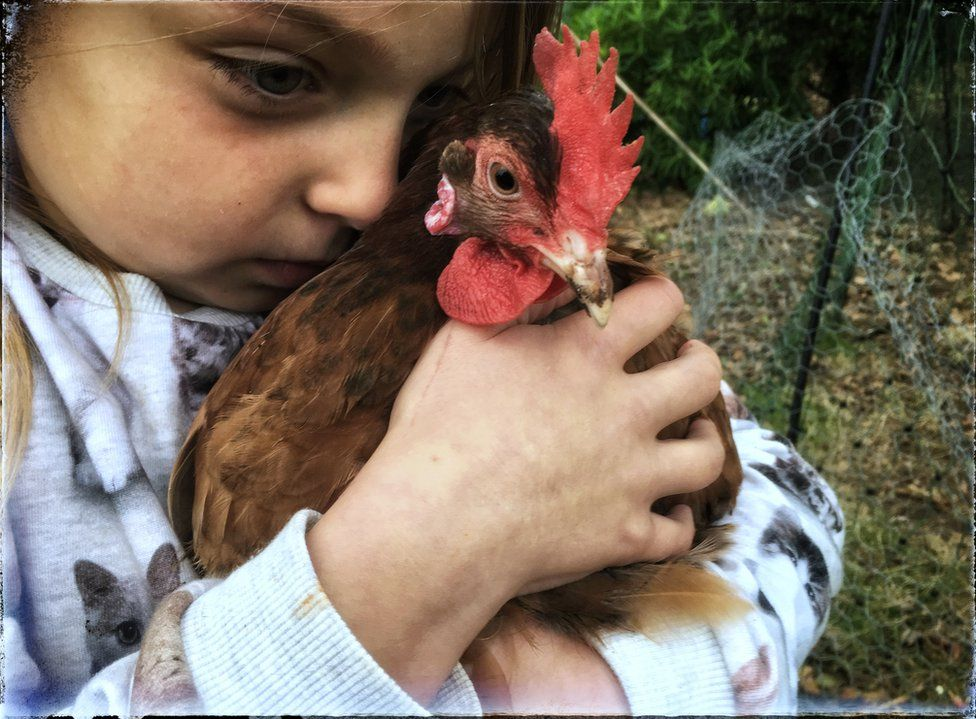 A girl hugs her chicken in West Penwith.
