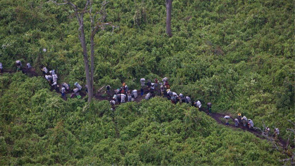 Aerial views of people carrying illegal charcoal through Virunga National Park in rebel FDLR territory, February 11, 2008