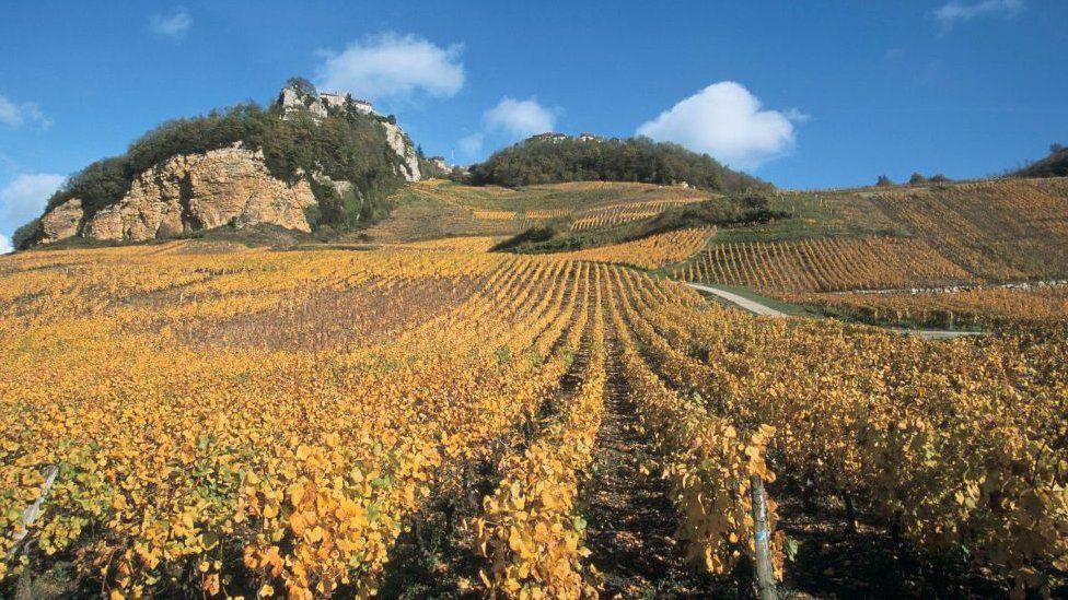Vin jaune, Vignoble de Chateau-Chalon, Jura