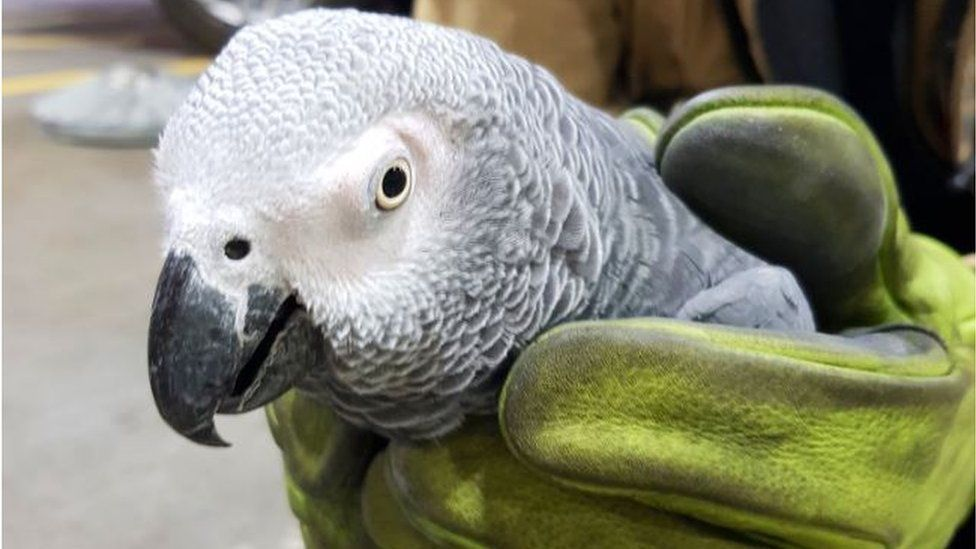 Hugo the parrot in hands of fire fighter