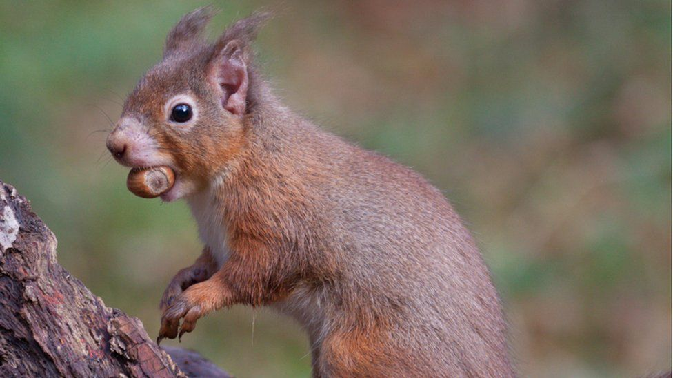 Mild signs of infection in a squirrel