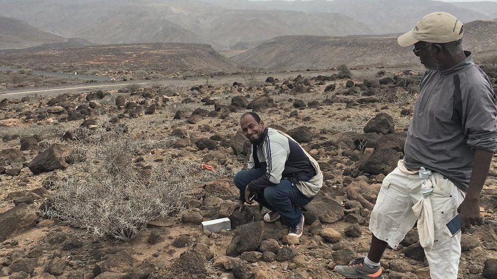 Discovery of Somali sengi