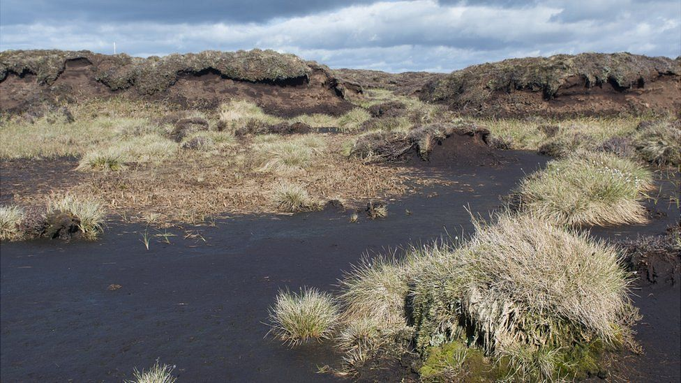 Peat moor, Yorkshire