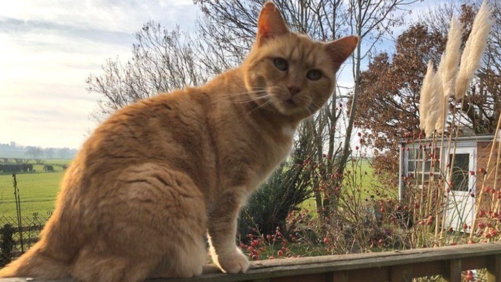 Cat enjoying the spring sunshine in Shropshire
