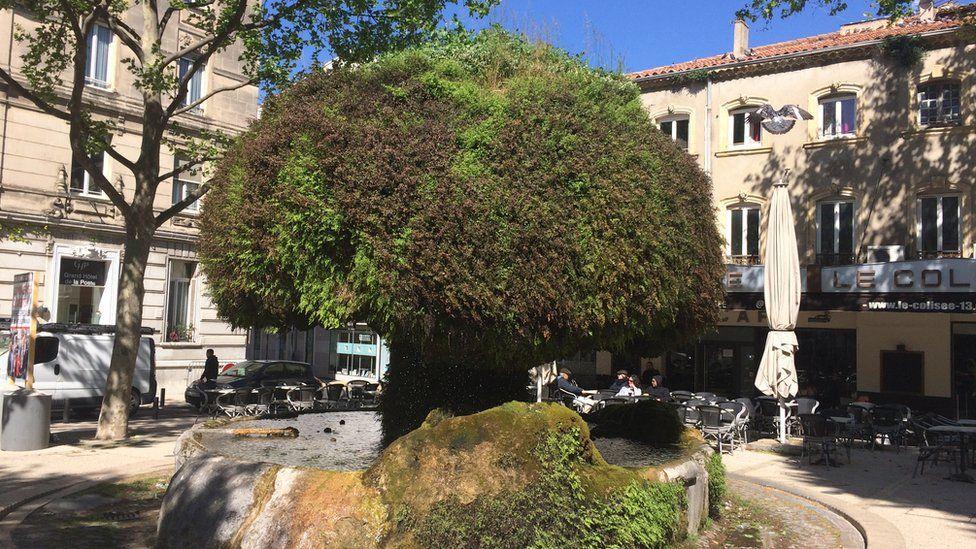 A tree in a square at Salon-de-Provence