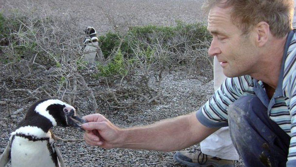 Prof Wilson feeds a penguin