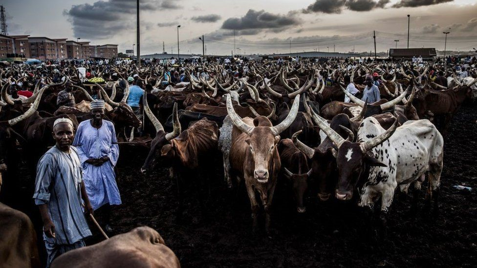 Herdsmen along with their cows wait for buyers at Kara Cattle Market in Lagos, Nigeria, on April 10, 2019. - Kara cattle market in Agege, Lagos is one of the largest of West Africa receiving thousands of cows weekly due to the massive consumption of meat in Lagos area.