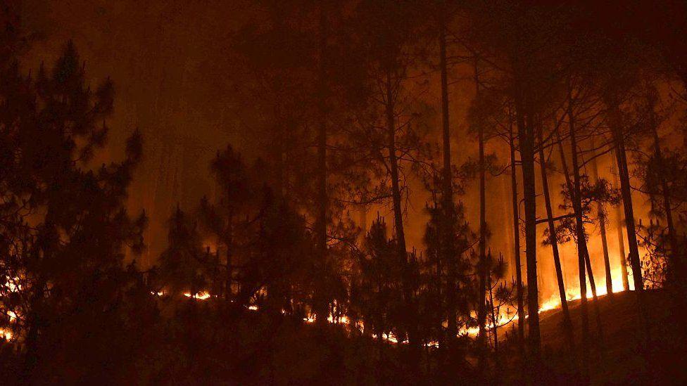 Forest fires in Ranikhet district of Uttarakhand state